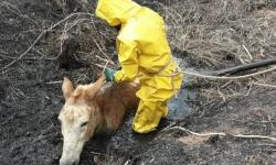 Mula é resgatada pelo Corpo de Bombeiros após cair em fossa em Ubaporanga