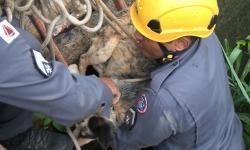 Cachorro é resgatado por bombeiros às margens do Rio Caratinga