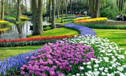 Flores por todo o caminho