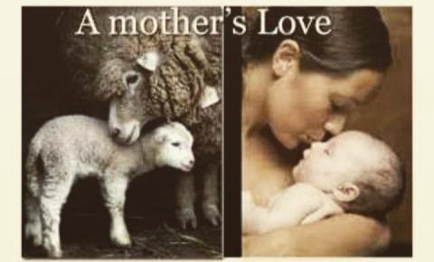 Vivências pessoais e coletivas dos aspectos maternos