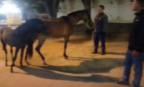 Seis animais de grande porte são recolhidos pela vigilância sanitária durante a madrugada em Caratinga