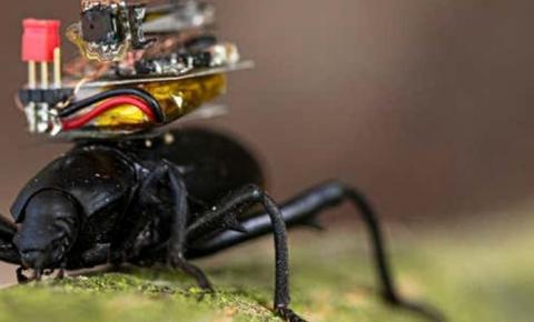 Pesquisador projeta câmera minúscula para equipar besouros