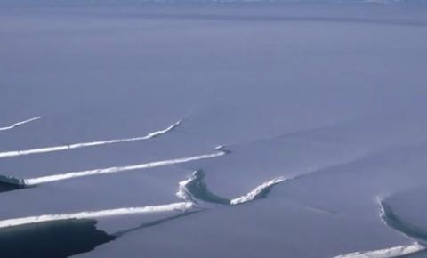 Criaturas misteriosas são descobertas em camada da Antártica