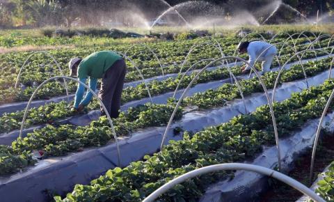 Registro de 39 defensivos agrícolas genéricos é publicado pelo Diário Oficial da União