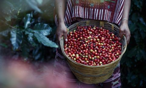Dia Nacional do Café: exportação apresenta queda de 8,5%