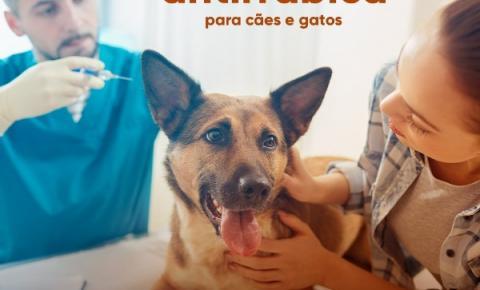 Secretaria de Saúde de Caratinga inicia vacinação contra a raiva para cães e gatos
