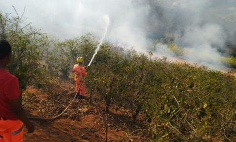 Incêndio avança contra lavoura de café e deixa produtor rural no prejuízo