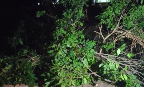 Queda de árvore deixa trânsito funcionando parcialmente na BR-116, entre Caratinga e Ubaporanga