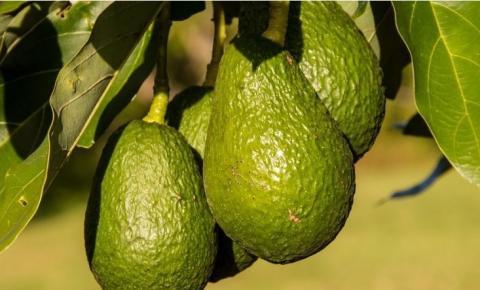 Trio é preso com mais de uma tonelada de abacates roubados em Araxá